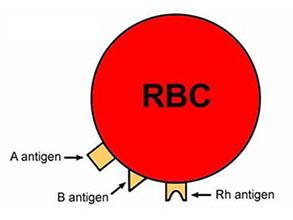 稀有血型抗原类