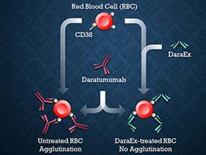 ImusynDaraEx抗-CD38抗体中和剂