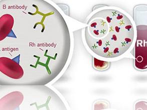 Rh-及Rh-亚型系统抗血清