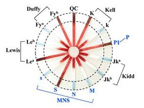 MNSs和P1系统抗血清